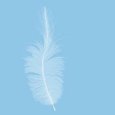 stock-illustration-2620832-feather