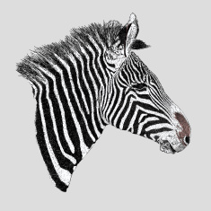 stock-illustration-75413821-zebra