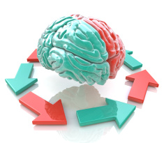 stock-photo-72861711-left-brain-right-brain-concept-human-brain-hemispheres